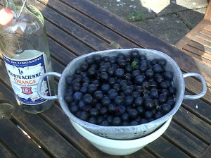 Sloes. Each one needs to be pricked with a needle. (Seven times, apparently).